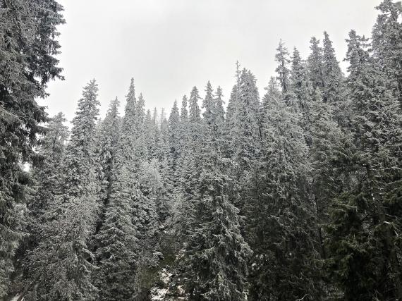 Údolí Bílé Opavy